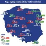 zubry_polska.jpg