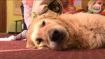 Dogoterapia ? leczniczy wpływ psa na człowieka