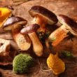 Krem z grzybów leśnych zapiekany z serem żółtym